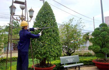 Quản lý chăm sóc công viên cây xanh